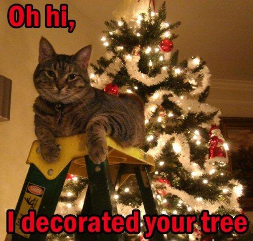 Katze dekoriert den Weihnachtsbaum